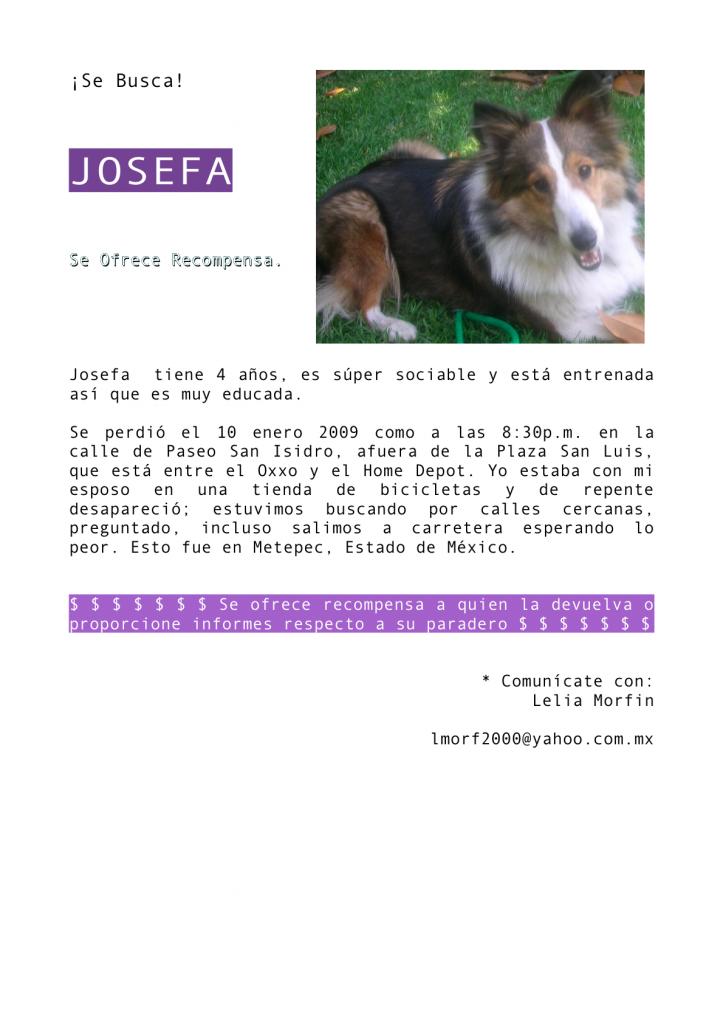 Se busca! | Vida de Perros