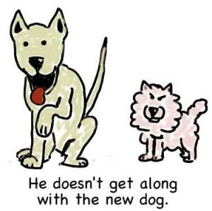 No se lleva bien con el perro nuevo.