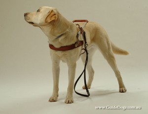guidedogsnsw