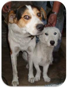 Rocco y Pinto. Resctados de Eje 10 en 2009. Aún buscan un hogar y tú puedes adoptarlos.