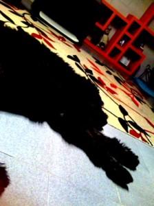 Oso sleeps