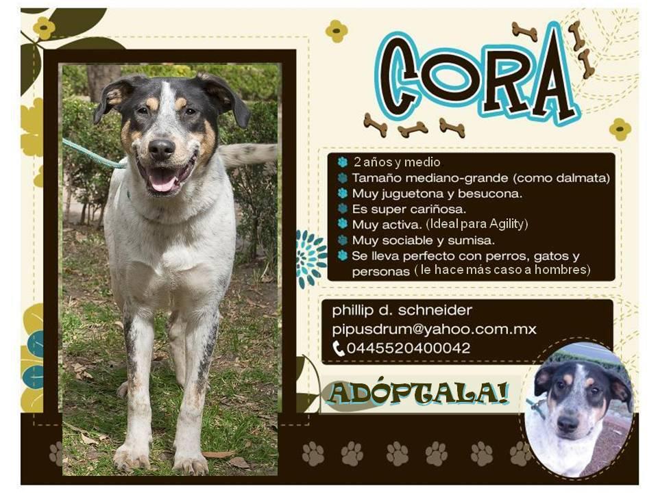 En adopción – Cora | Vida de Perros