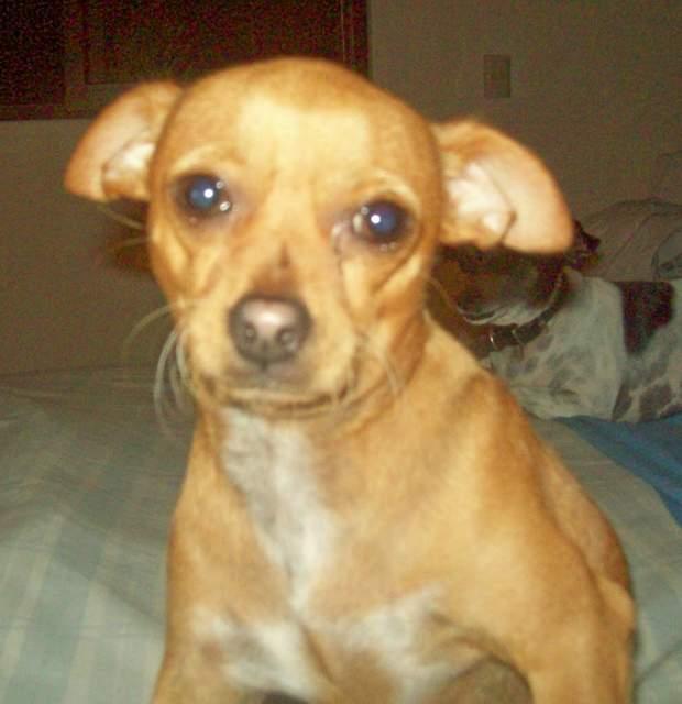 Cachorros En Adopcion Zaragoza