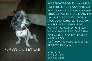noid-anuncio_perrito