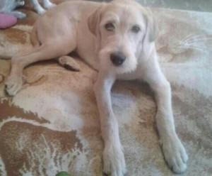 noid-perro-en-adopcion-urge_MLM-F-4492879933_062013
