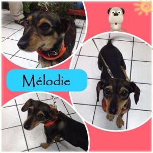 noid-Melodie