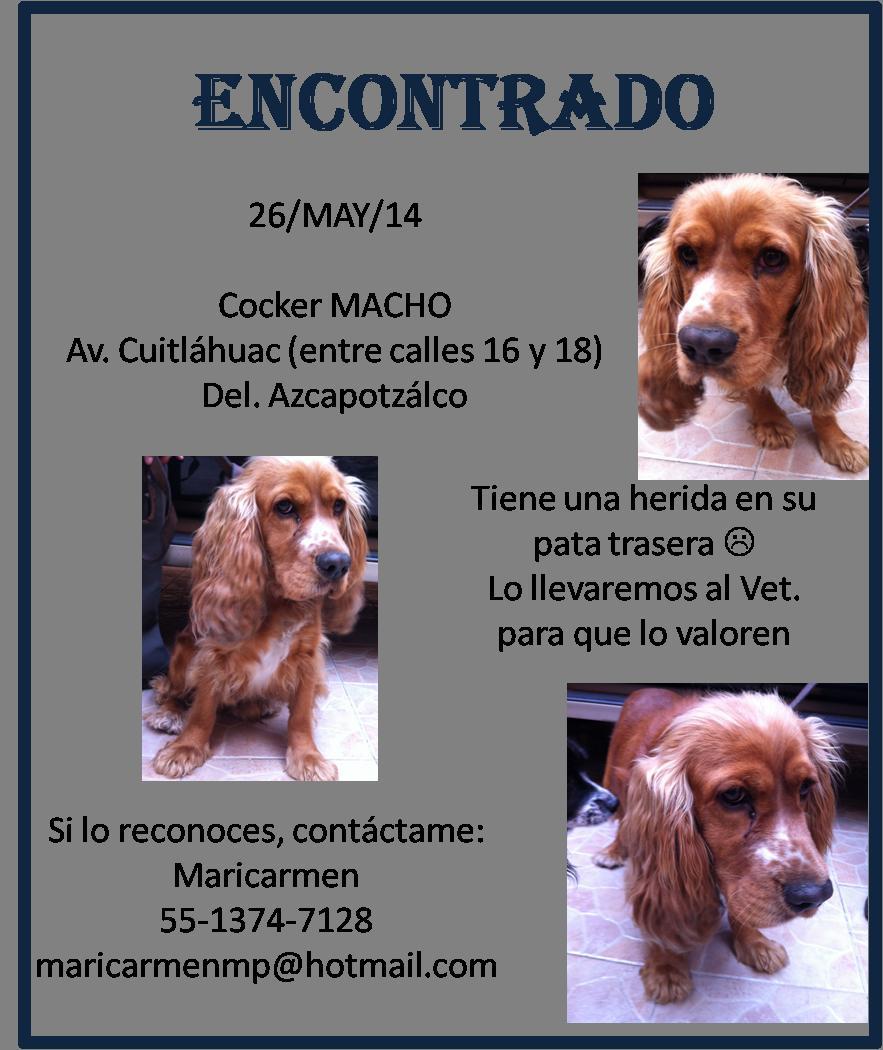Encontrado – cocker macho (Azcapotzalco) | Vida de Perros