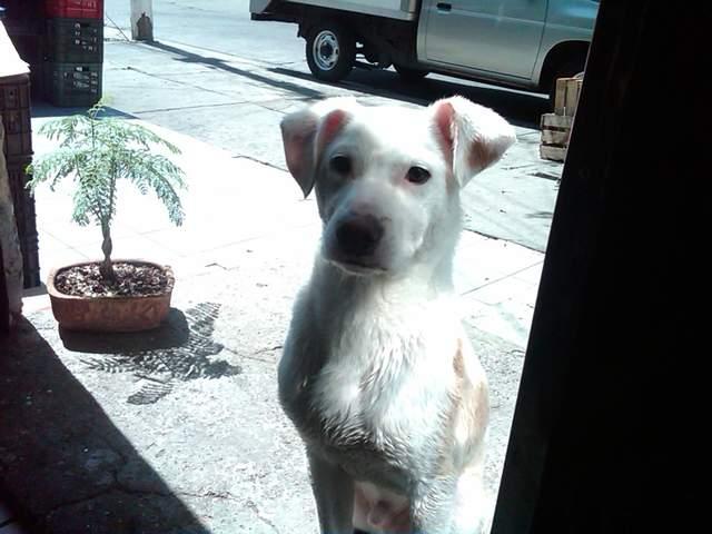 noid-perro_-_Copia