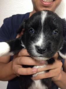 noid-perritos_para_dar_en_adopcion